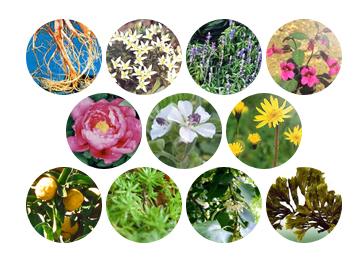 植物エキス11種