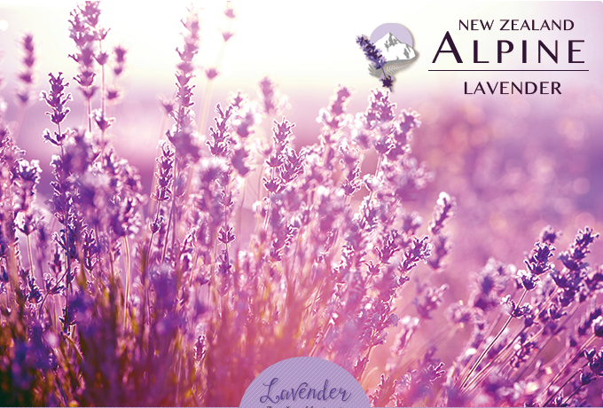 alpinelavenderのラベンダー畑